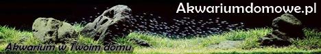 akwariumdomowe-468-80