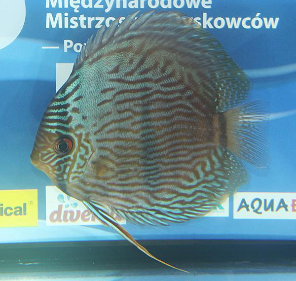 2 - Jacek Skwieciński - PL