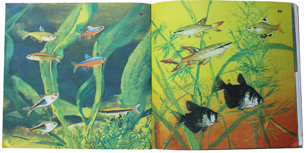 akwarium i jego mieszkancy