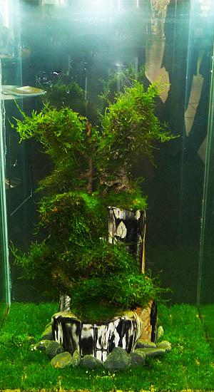 aquaflora1