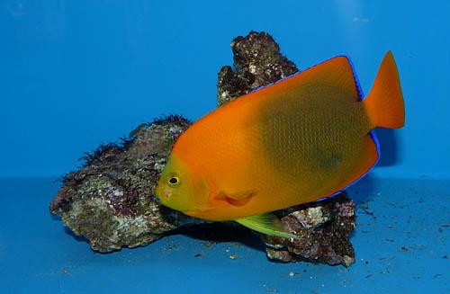 aquaflora12