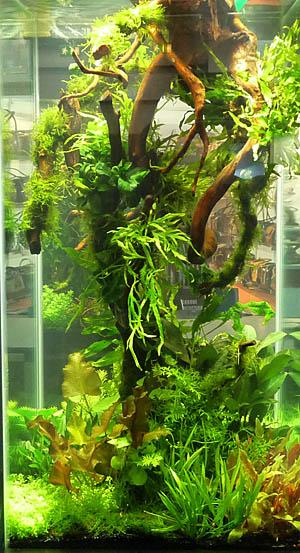 aquaflora2