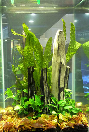 aquaflora4