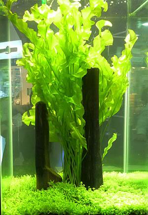 aquaflora5