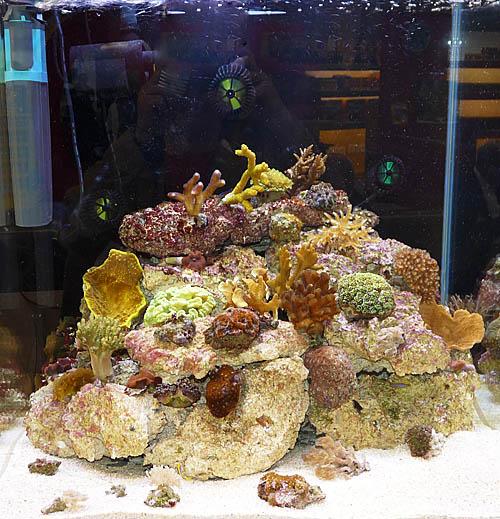 aquariumsystem1