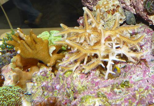 aquariumsystem2
