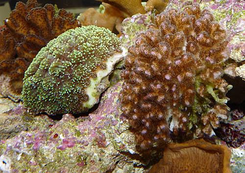 aquariumsystem3