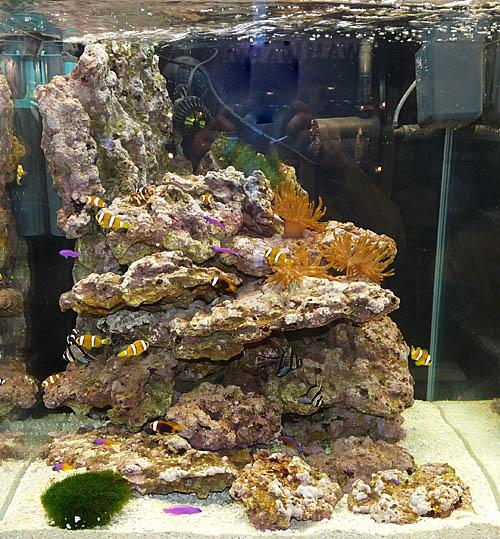 aquariumsystem4