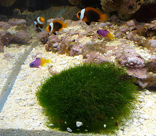 aquariumsystem5