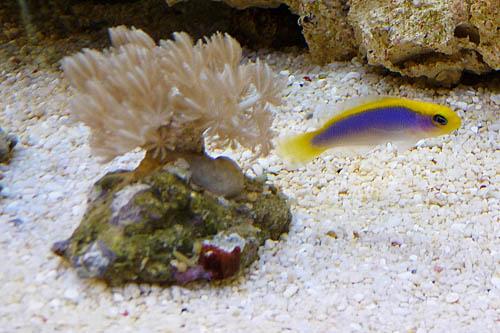 aquariumsystem6