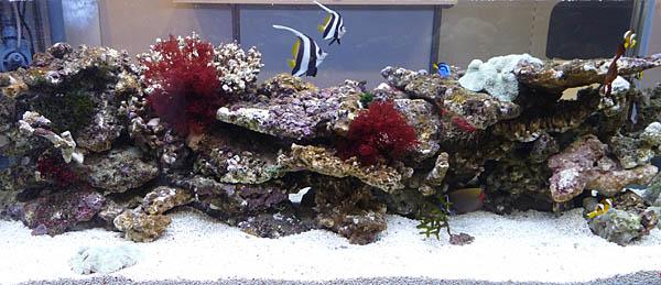 aquaticn2