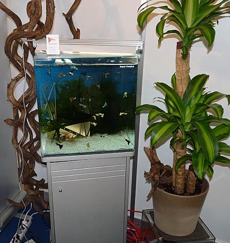 aquatropica9