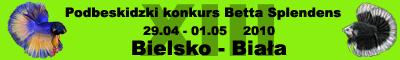 baner_bojownik