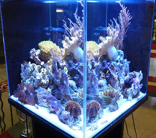 morskie1
