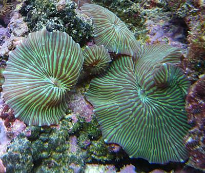 morskie4