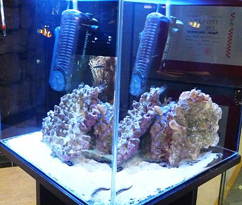 morskie8