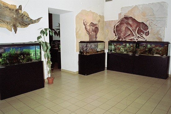 wystawa102