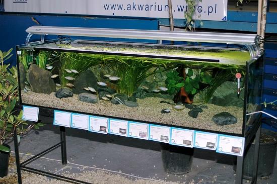 akwarium_wta2