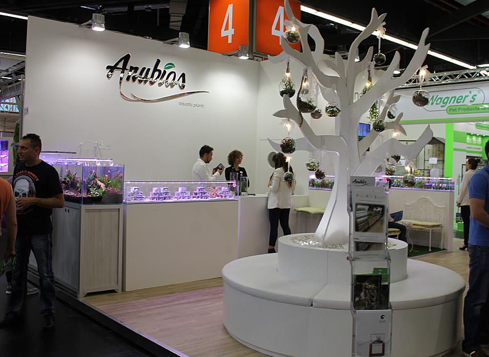 anubias12