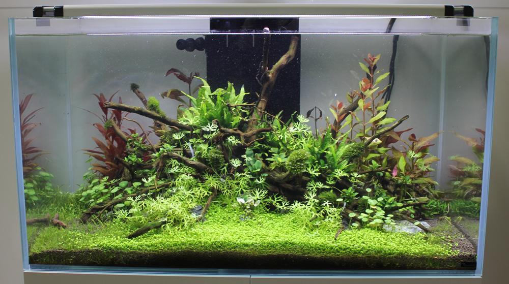 aquatlantis2