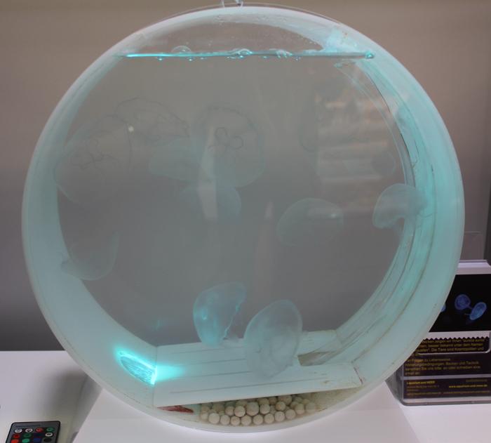 jelyfish2