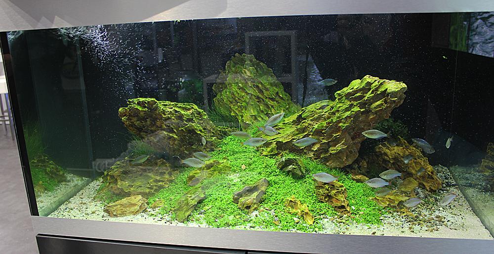 oase5