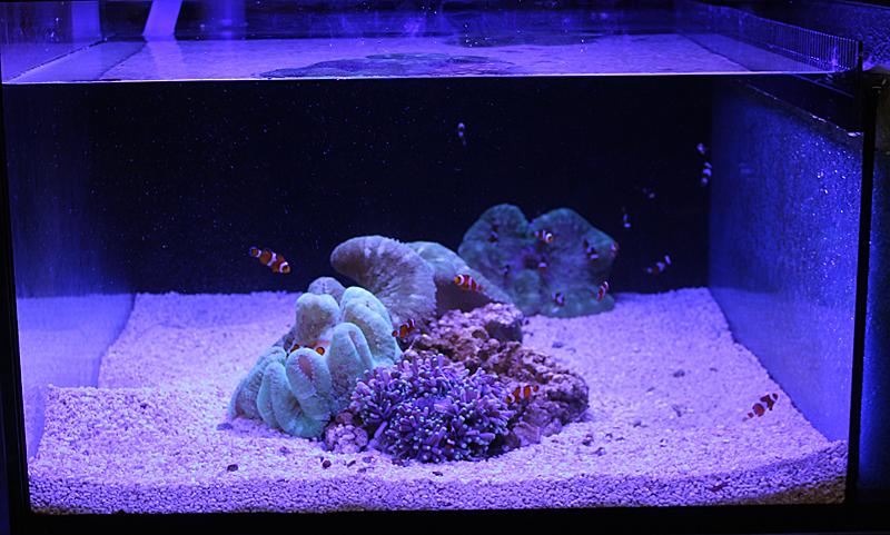petra aqua3