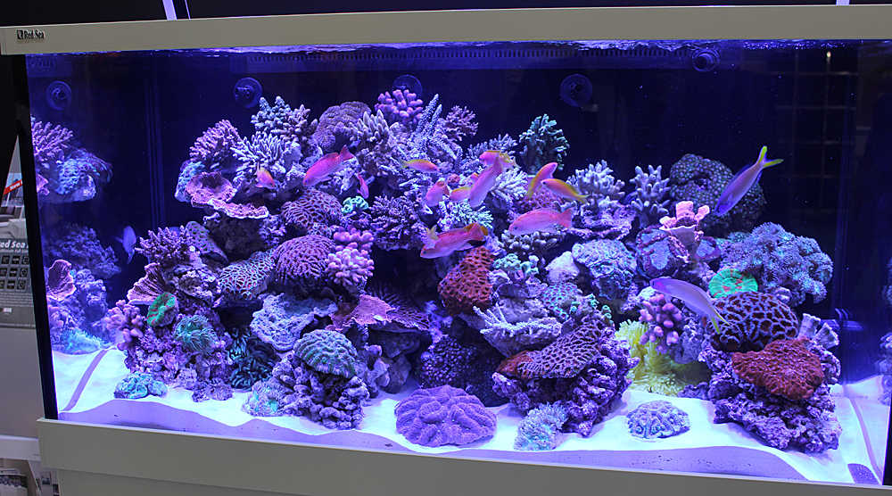 red sea6