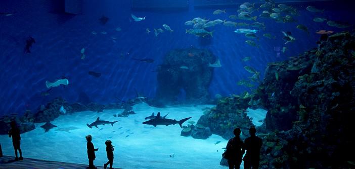 Oceanarium - Błękitna Planeta - Kopenhaga 36g-702x336