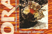 koral