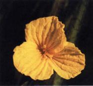 p69-4