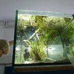 Zbiornik z roślinami z jeziora Tanganika: Neolamprologus caudopunctatus Kapampa i Lamprologus speciosus Kizike