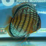 Jacek Skwieciński - POL - Miejsce w grupie - 2, Miejsce w klasie - 15, Pkt: 302, śr: 75,50