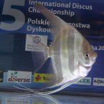 Radosław Koprowski, Grupa: Żaglowiec wysoki - miejsce 3, Klasa: naturalne - miejsce 4, 80,60 pkt
