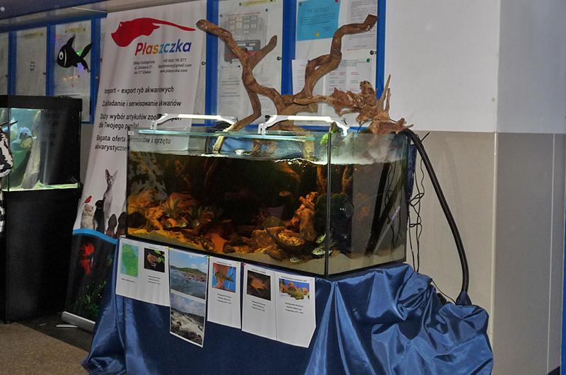 Konkurs akwarium biotopowe