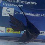 Grzegorz Mierzejewski, Grupa: długopłetwe - miejsce 2, Klasa: hodowlane - miejsce 10, 76,6 pkt