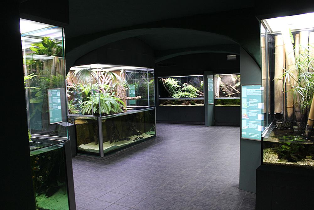 Muzeum Przyrodnicze w Görlitz